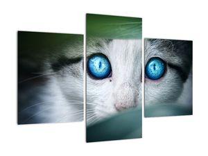 Obraz kočky (V020944V90603PCS)