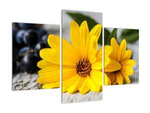 Obraz žluté květiny (V020952V90603PCS)