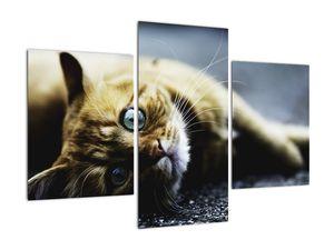 Obraz kočky (V020963V90603PCS)