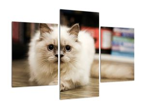 Obraz bílé kočky (V021124V90603PCS)