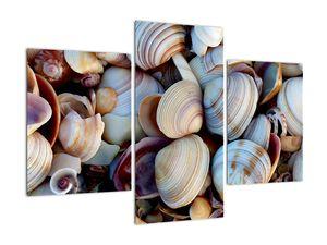 Kagyló képe (V021131V90603PCS)