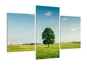 Obraz stromu na louce (V021171V90603PCS)