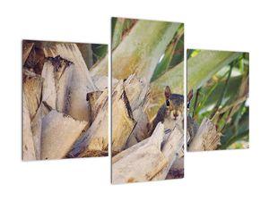Obraz veverky na stromu (V021177V90603PCS)