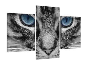 Obraz kočky (V021221V90603PCS)