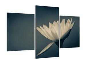 Obraz květiny (V021223V90603PCS)