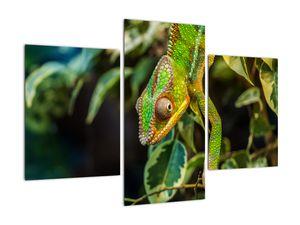 Obraz chameleona (V021236V90603PCS)