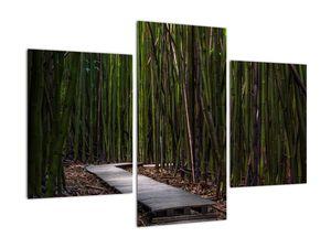Obraz - Medzi bambusy (V021324V90603PCS)