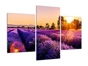 Obraz levandulového pole, Provence (V021590V90603PCS)