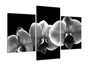Obraz květu orchideje (V022015V90603PCS)
