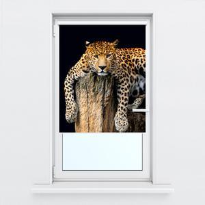 Fotoroleta R012344R80150 (R012344R80150)