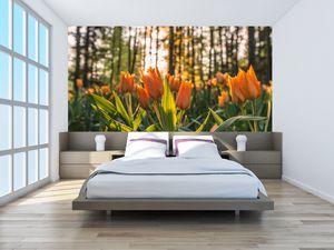 Fototapeta - Oranžové tulipány (T020552T200112)