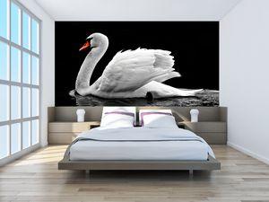 Fototapeta - černobílé labutě (T020586T200112)