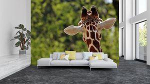 Fototapeta  - Žirafa zezadu (T020638T200150)